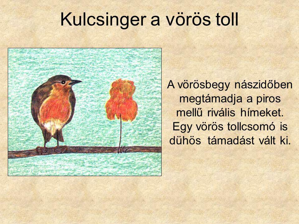 Kulcsinger a vörös toll