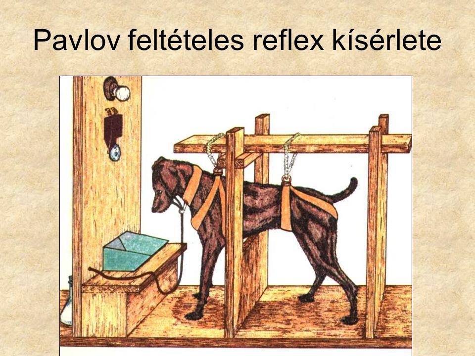 Pavlov feltételes reflex kísérlete