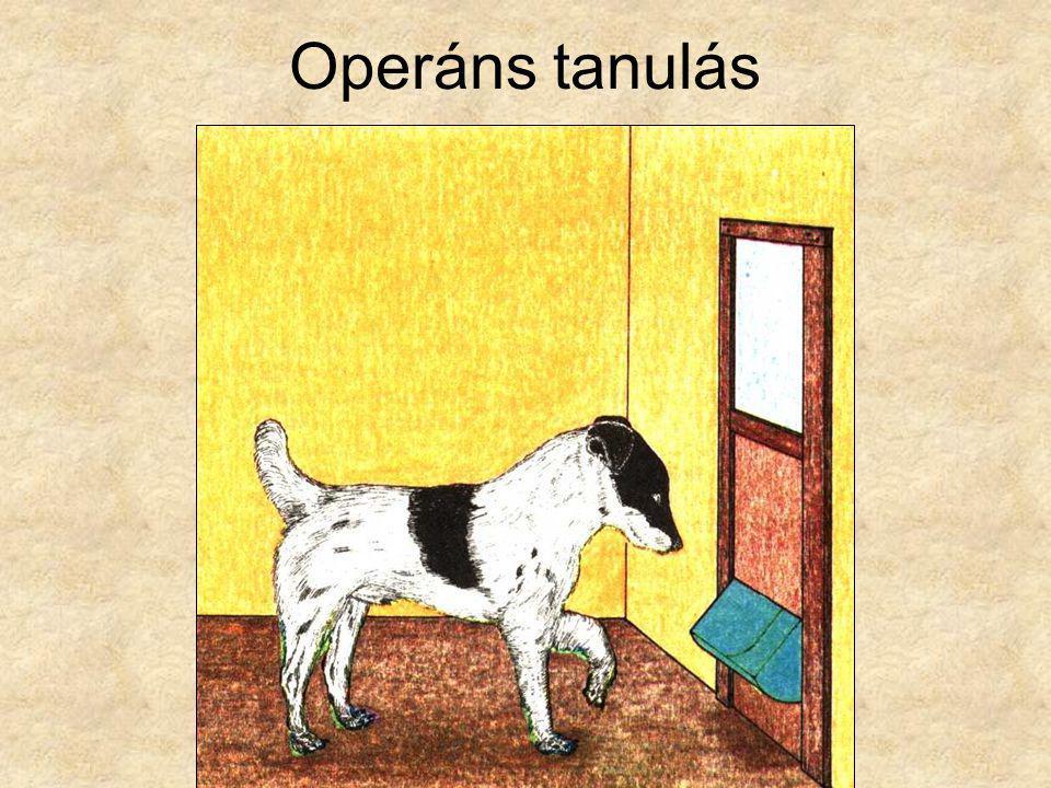 Operáns tanulás Csányi Vilmos: Kis etológia I., Gondolat Zsebkönyvek