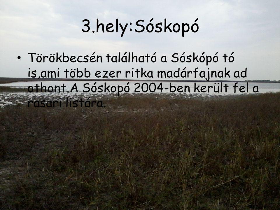 3.hely:Sóskopó Törökbecsén található a Sóskópó tó is,ami több ezer ritka madárfajnak ad othont.A Sóskopó 2004-ben került fel a rasari listára.