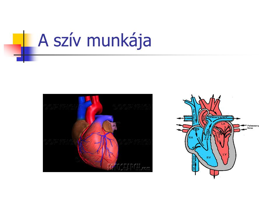 A szív munkája