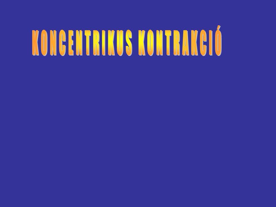 KONCENTRIKUS KONTRAKCIÓ