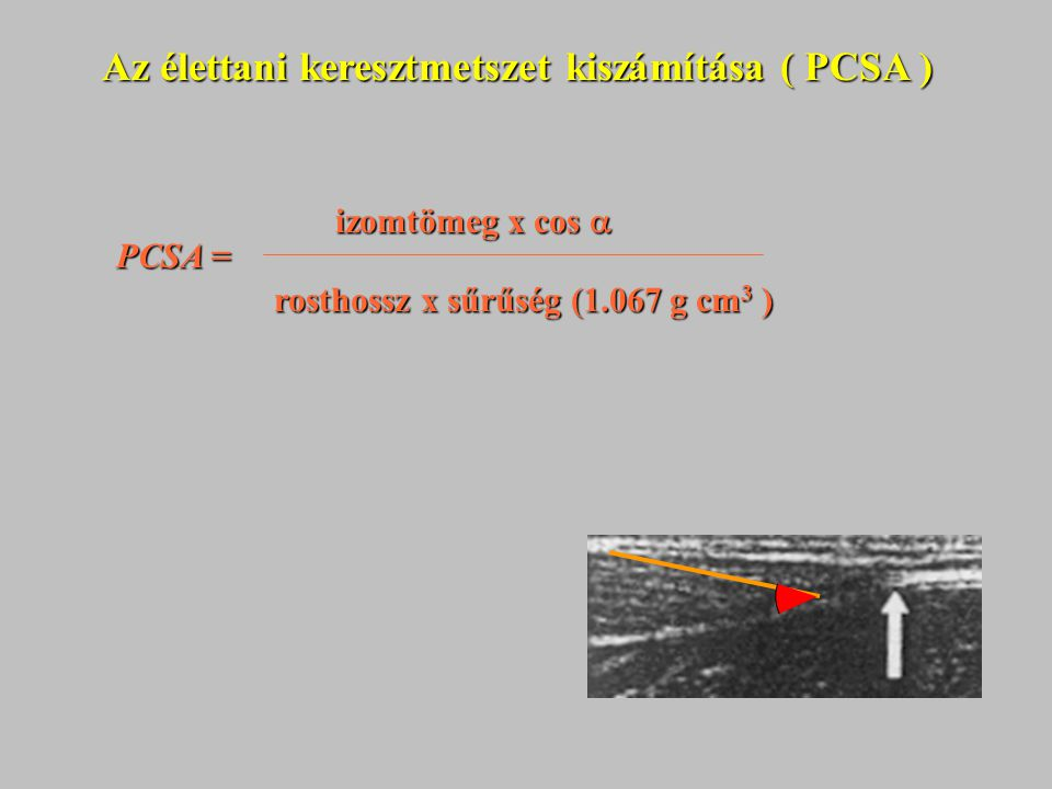 Az élettani keresztmetszet kiszámítása ( PCSA )
