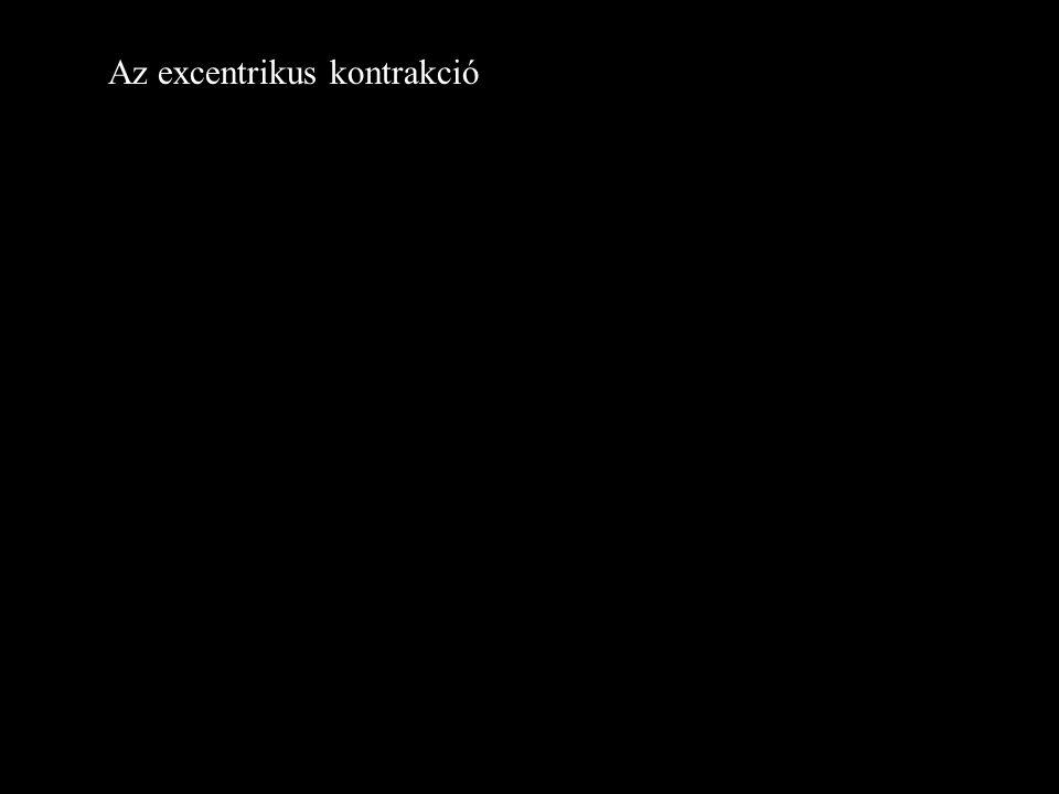 Az excentrikus kontrakció