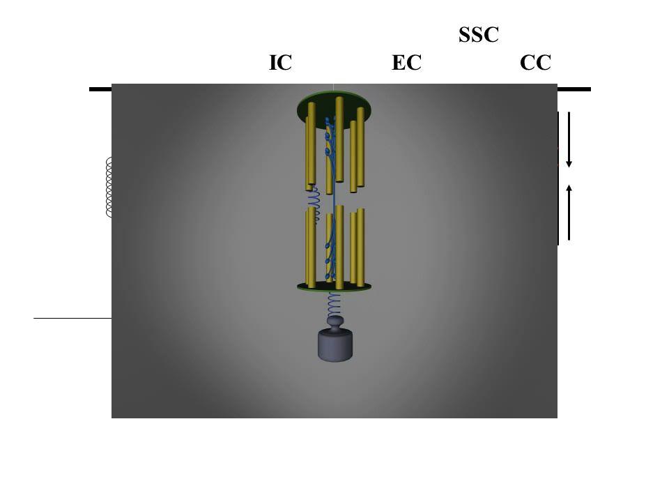 SSC IC EC CC Fex
