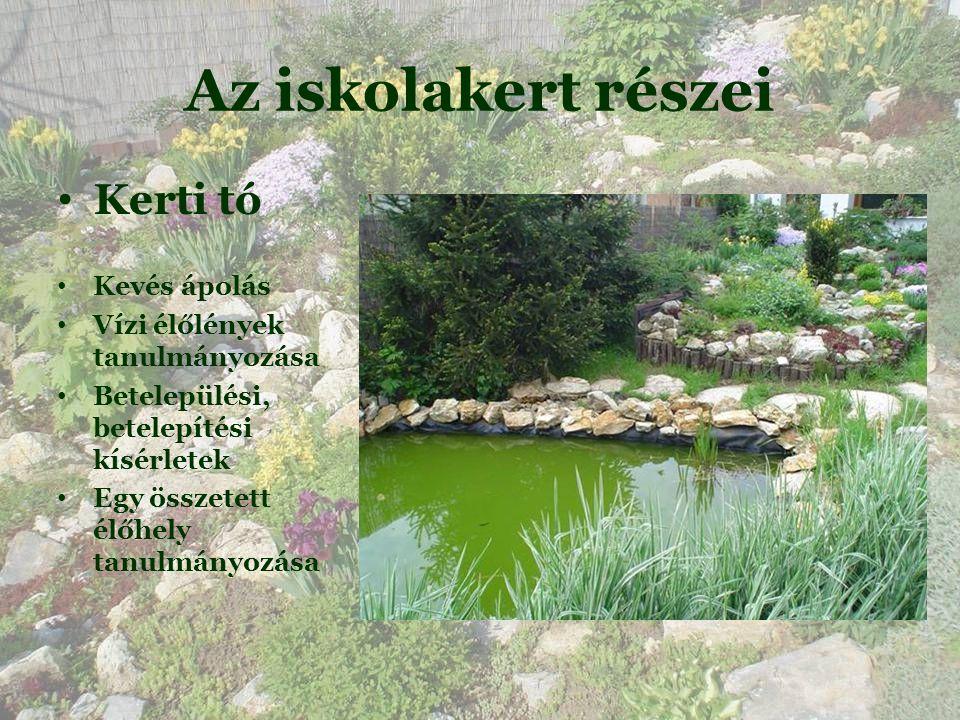 Az iskolakert részei Kerti tó Kevés ápolás