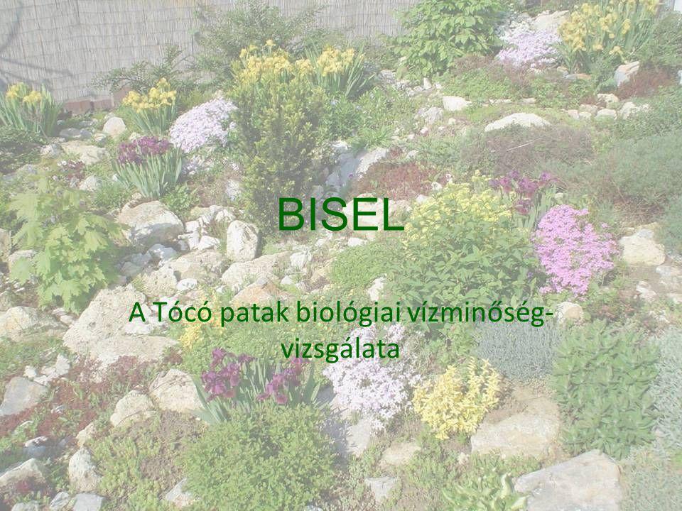 A Tócó patak biológiai vízminőség- vizsgálata
