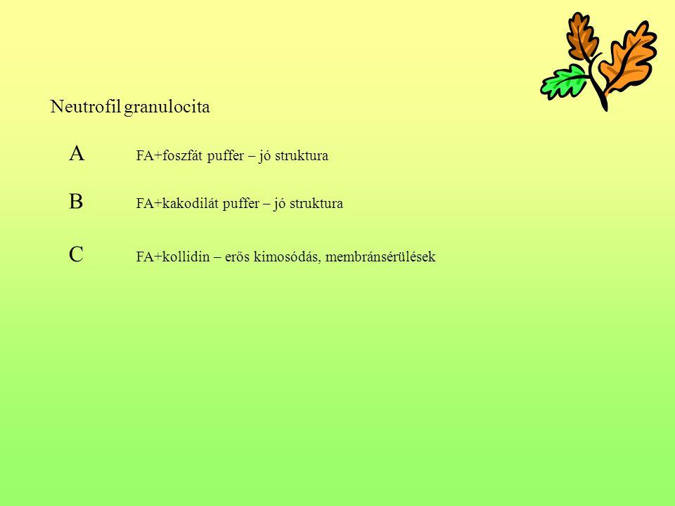 A FA+foszfát puffer – jó struktura
