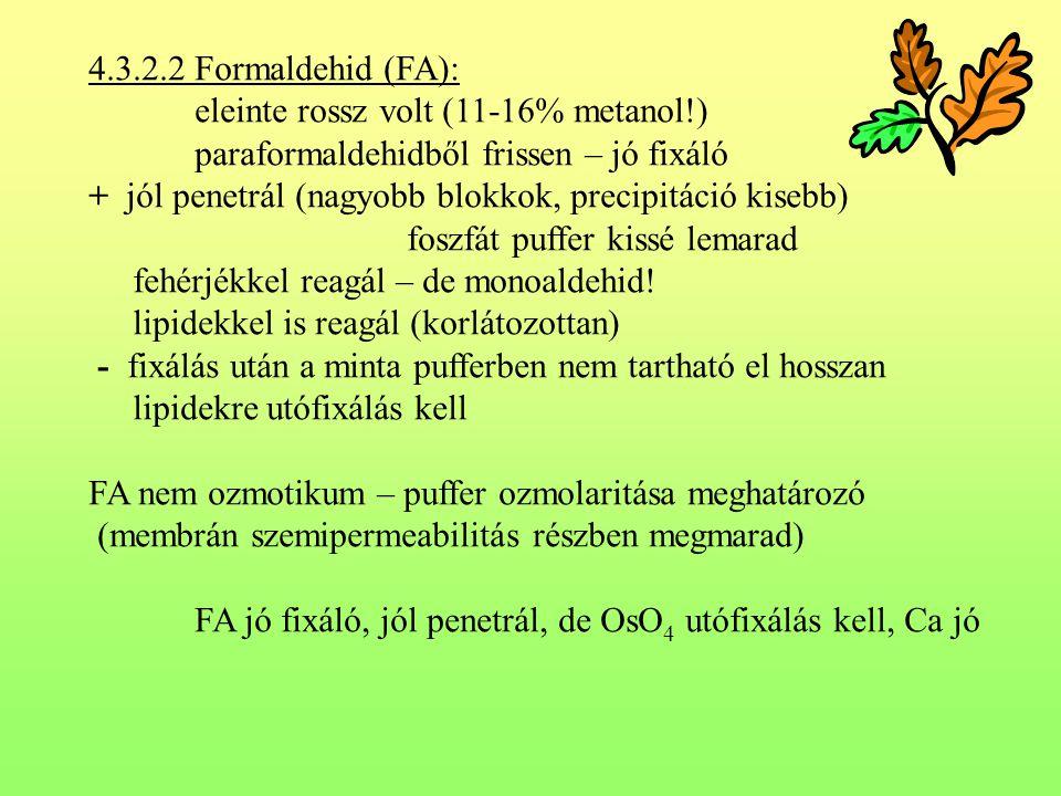 4.3.2.2 Formaldehid (FA): eleinte rossz volt (11-16% metanol!) paraformaldehidből frissen – jó fixáló.