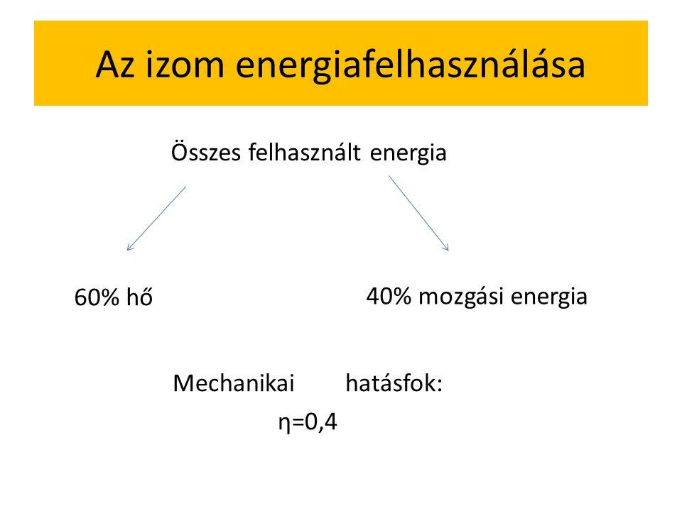 Az izom energiafelhasználása