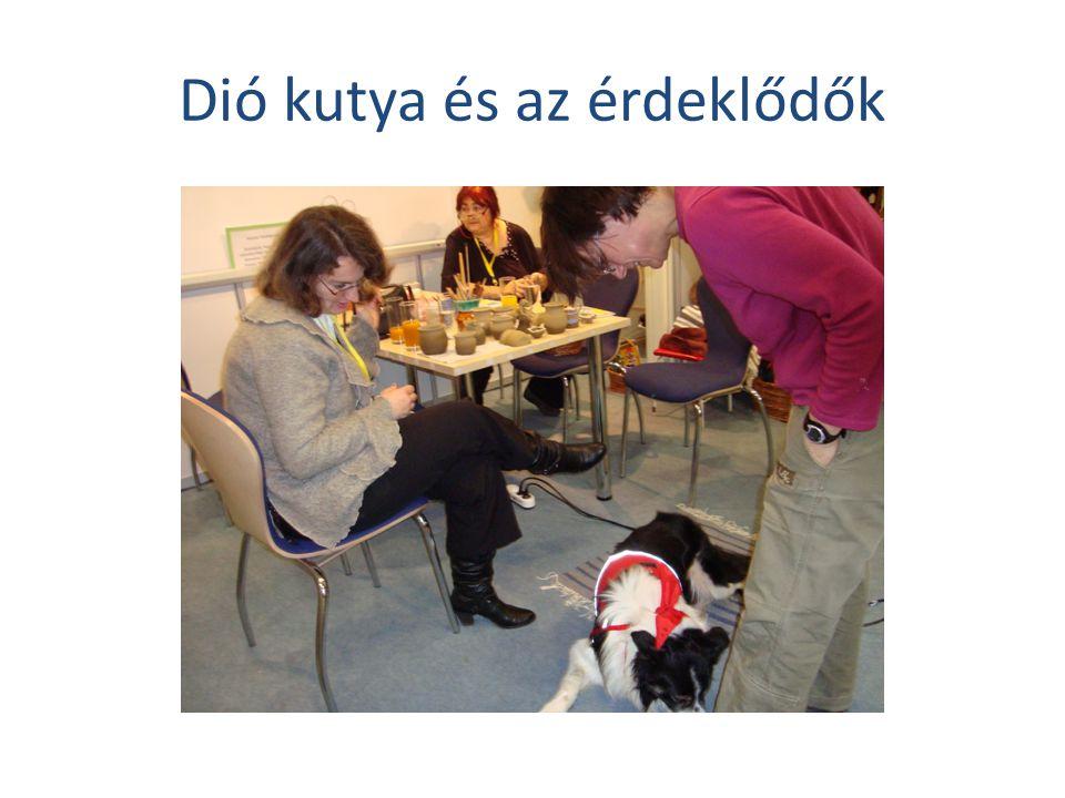 Dió kutya és az érdeklődők