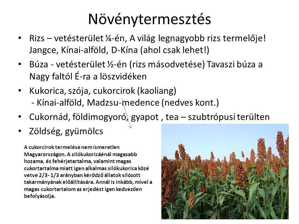 Növénytermesztés Rizs – vetésterület ¼-én, A világ legnagyobb rizs termelője! Jangce, Kínai-alföld, D-Kína (ahol csak lehet!)