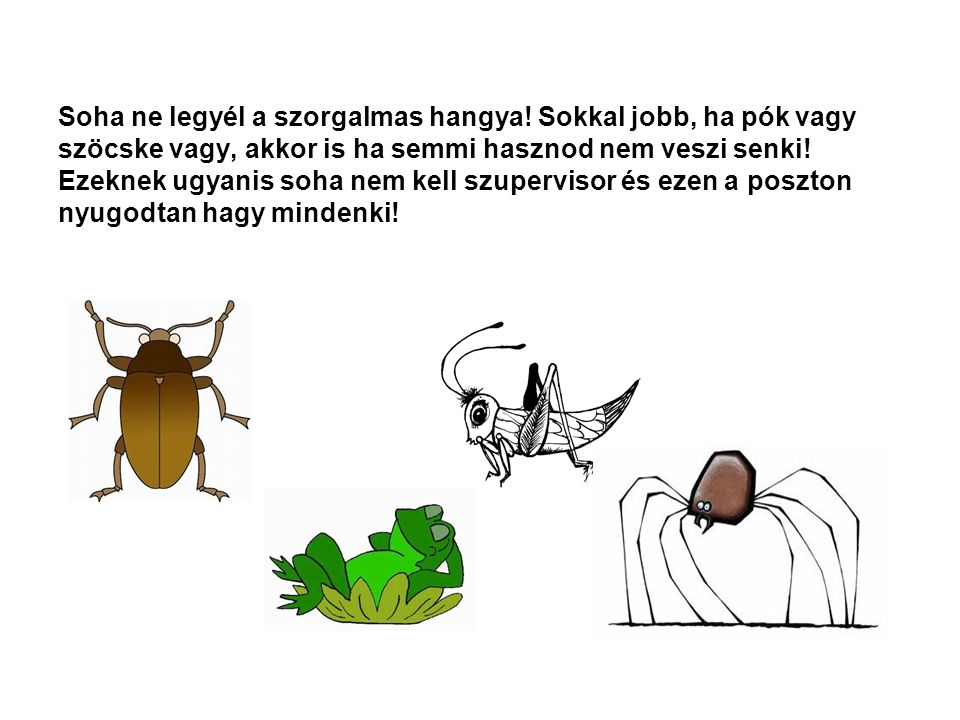 Soha ne legyél a szorgalmas hangya
