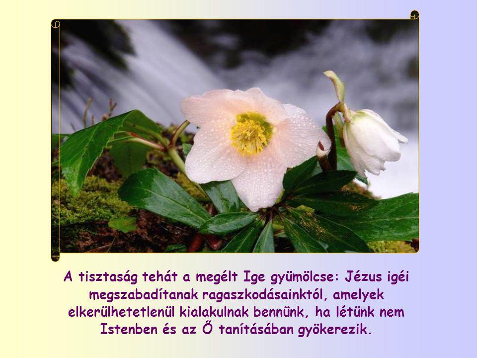 A tisztaság tehát a megélt Ige gyümölcse: Jézus igéi megszabadítanak ragaszkodásainktól, amelyek elkerülhetetlenül kialakulnak bennünk, ha létünk nem Istenben és az Ő tanításában gyökerezik.