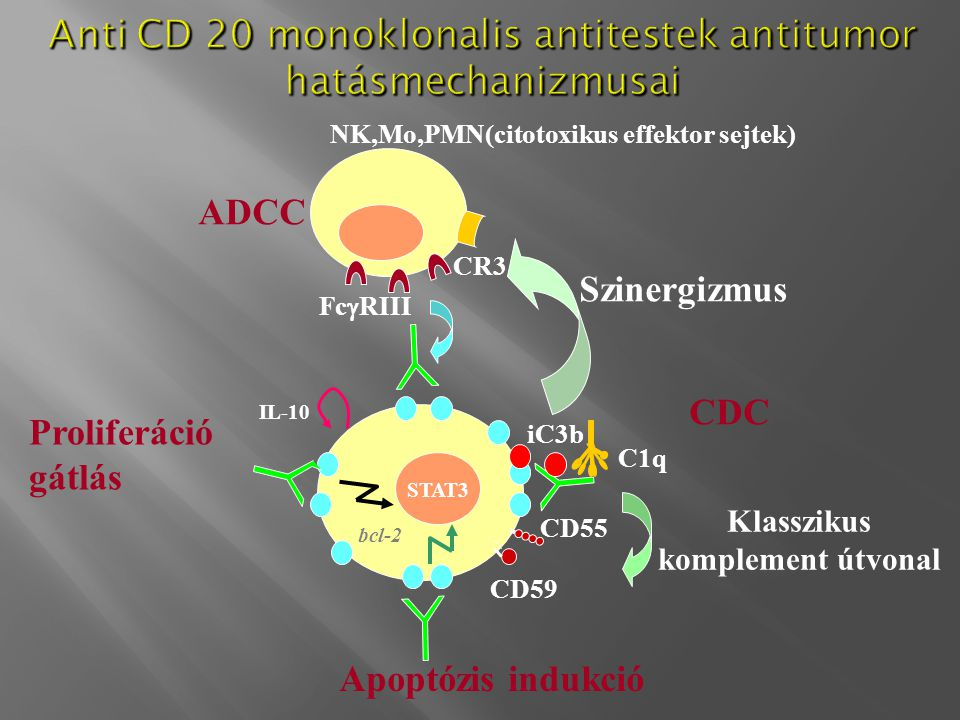 Anti CD 20 monoklonalis antitestek antitumor hatásmechanizmusai