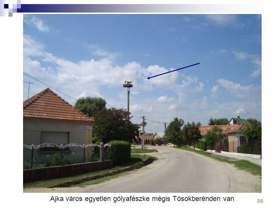 Ajka város egyetlen gólyafészke mégis Tósokberénden van