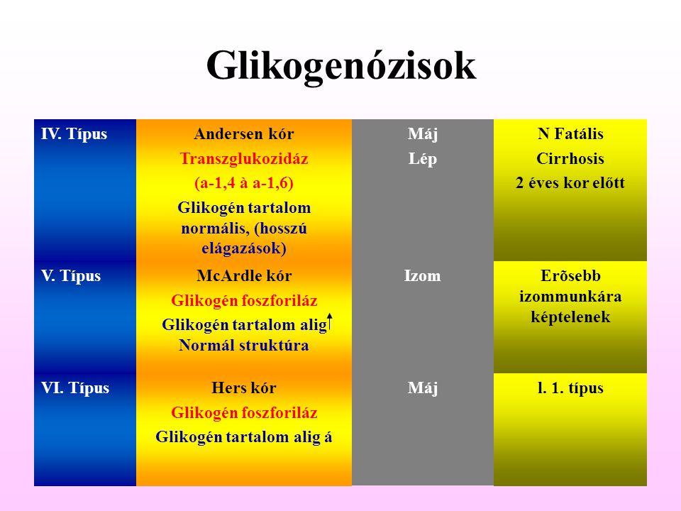 Glikogenózisok IV. Típus Andersen kór Transzglukozidáz (a-1,4 à a-1,6)