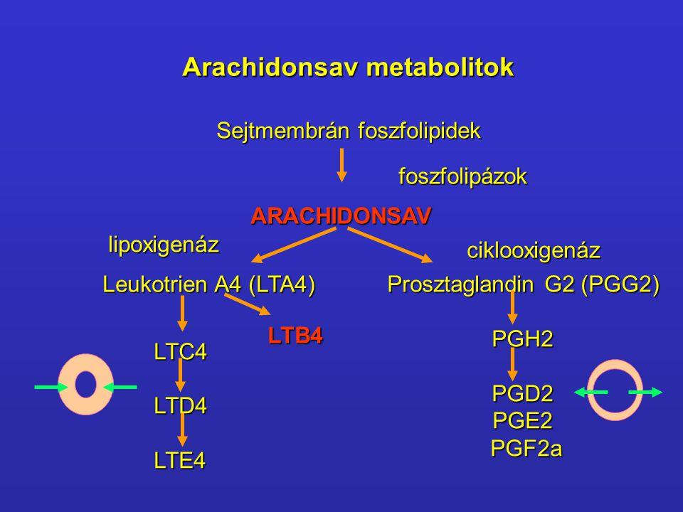 Prosztaglandin G2 (PGG2)