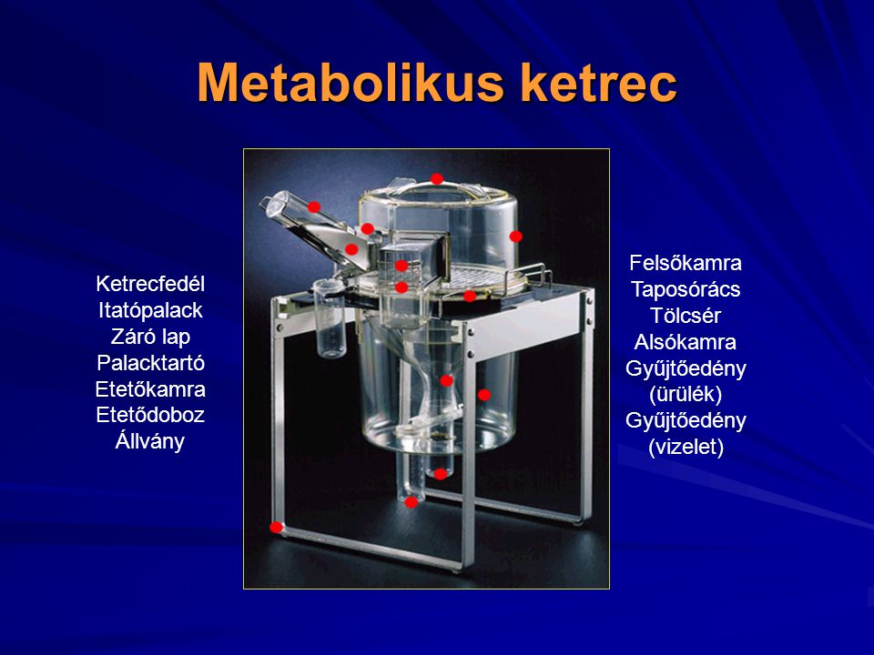 Metabolikus ketrec Felsőkamra Taposórács Ketrecfedél Tölcsér