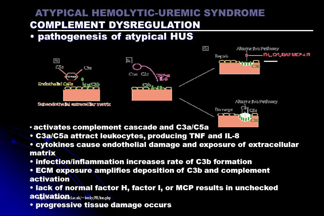 ATYPICAL HEMOLYTIC-UREMIC SYNDROME COMPLEMENT DYSREGULATION