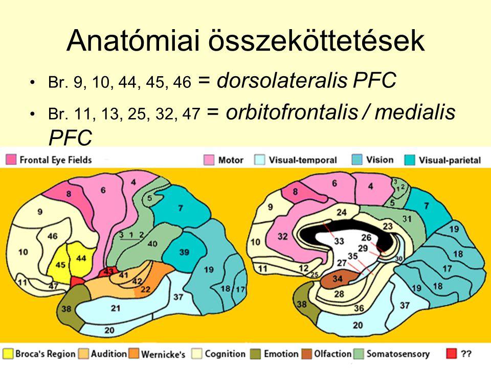 Anatómiai összeköttetések