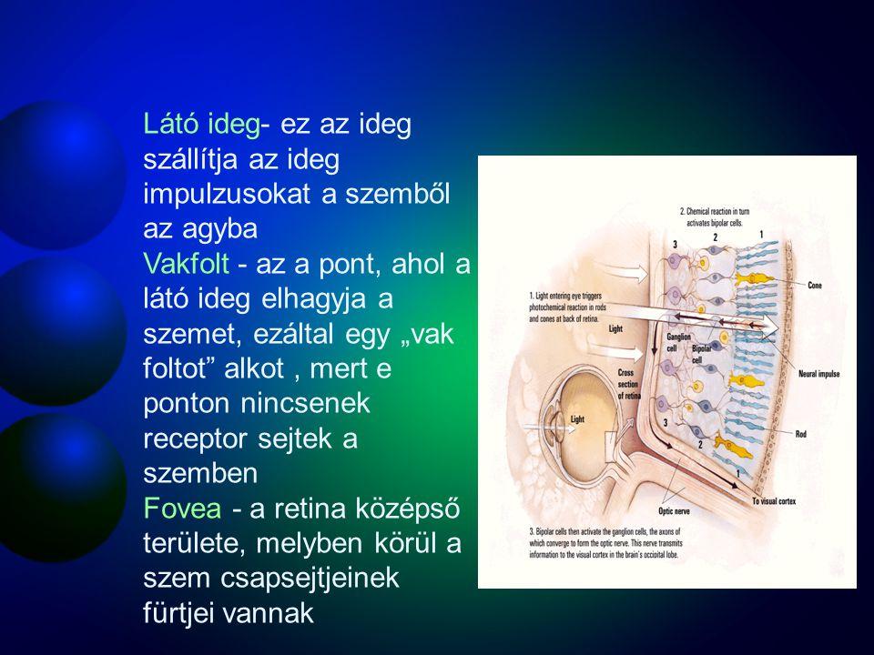 Látó ideg- ez az ideg szállítja az ideg impulzusokat a szemből az agyba