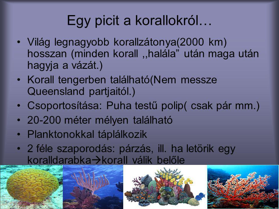 Egy picit a korallokról…