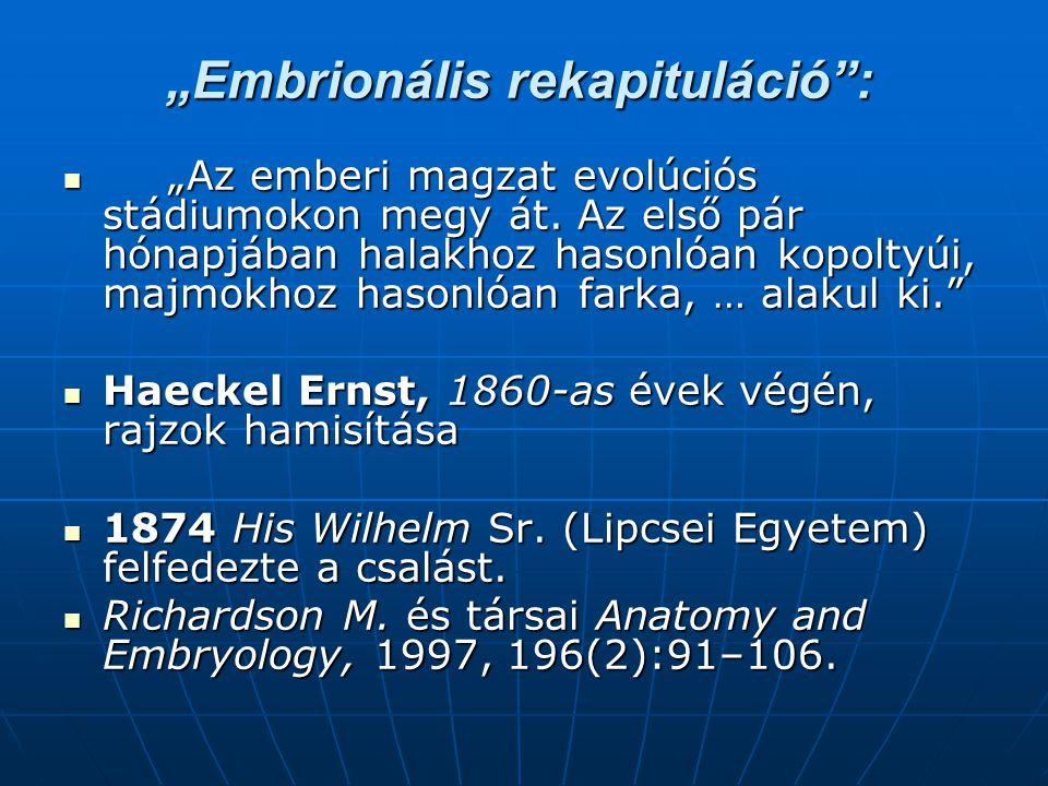 """""""Embrionális rekapituláció :"""