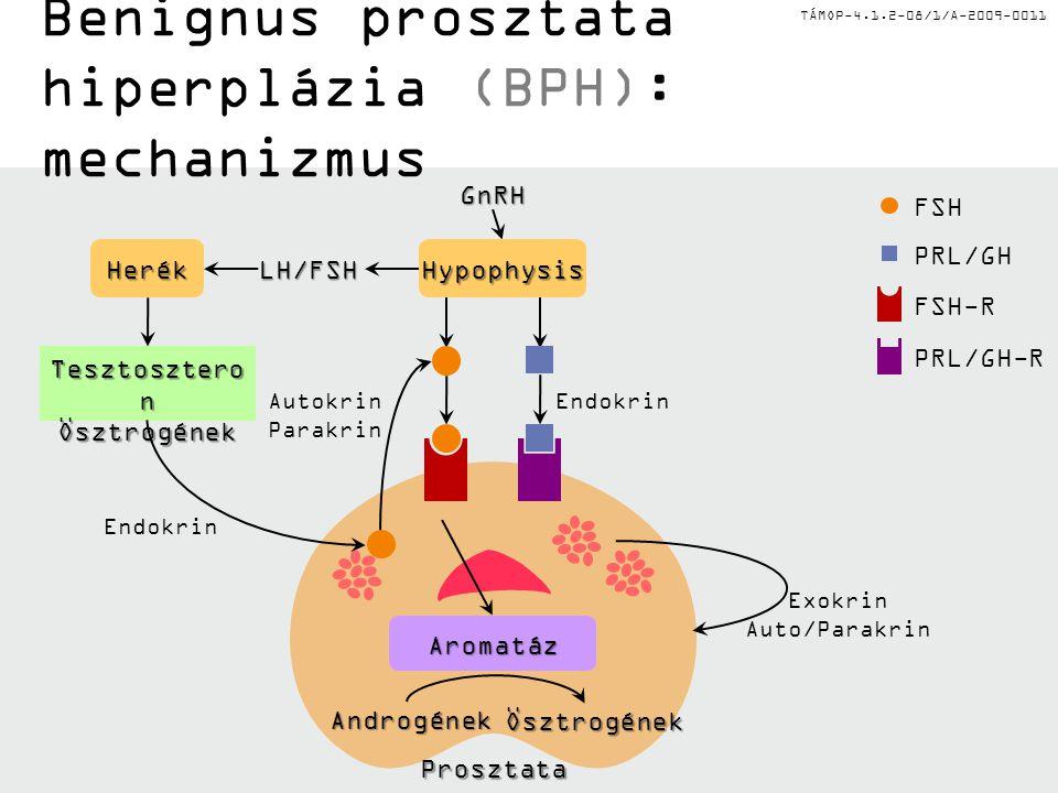 Benignus prosztata hiperplázia (BPH): mechanizmus