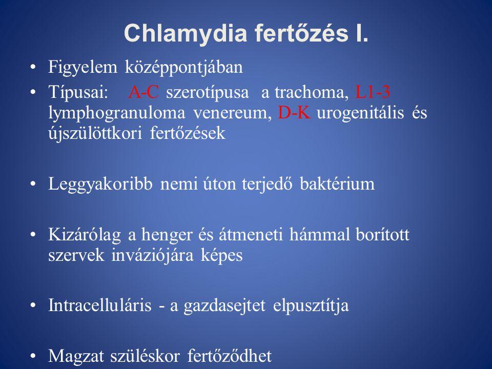 Chlamydia fertőzés I. Figyelem középpontjában
