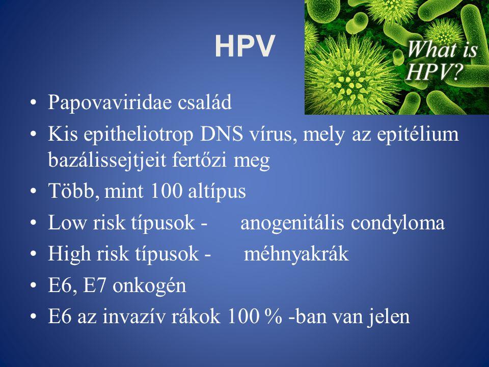 HPV Papovaviridae család