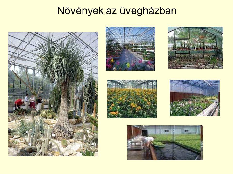 Növények az üvegházban