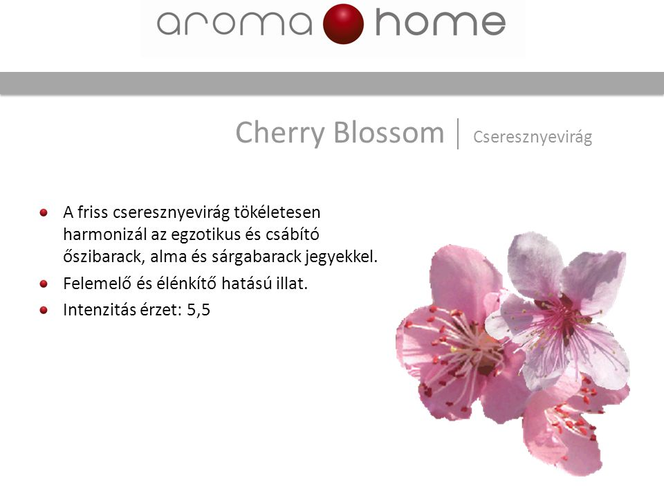 Cherry Blossom Cseresznyevirág