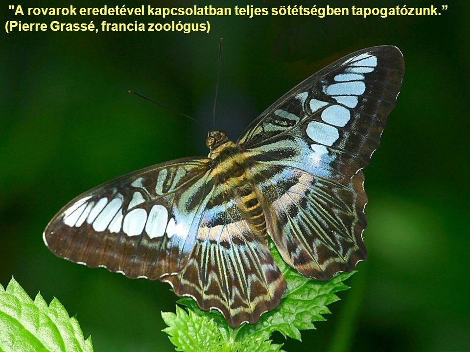 A rovarok eredetével kapcsolatban teljes sötétségben tapogatózunk