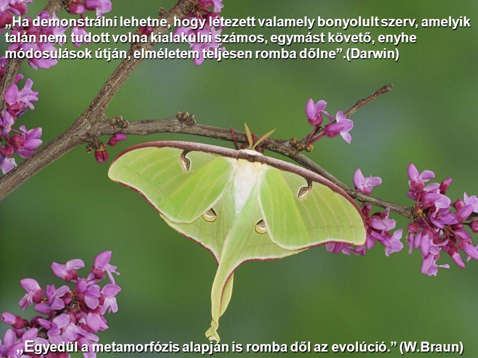 """""""Egyedül a metamorfózis alapján is romba dől az evolúció. (W.Braun)"""