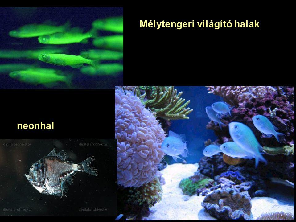 Mélytengeri világító halak