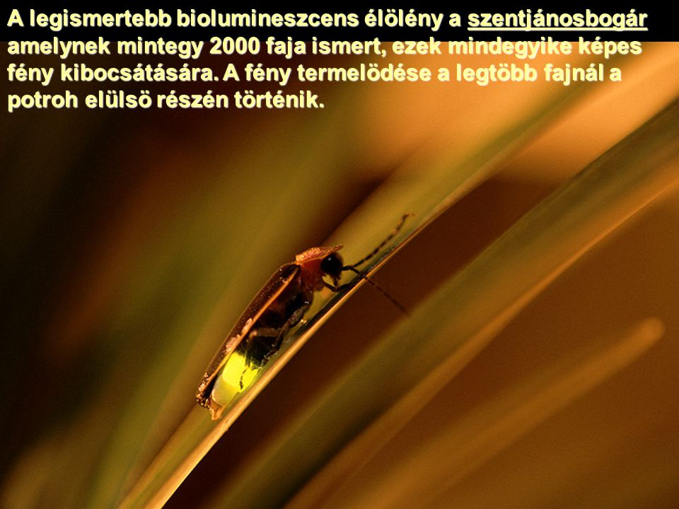 A legismertebb biolumineszcens élölény a szentjánosbogár amelynek mintegy 2000 faja ismert, ezek mindegyike képes fény kibocsátására.