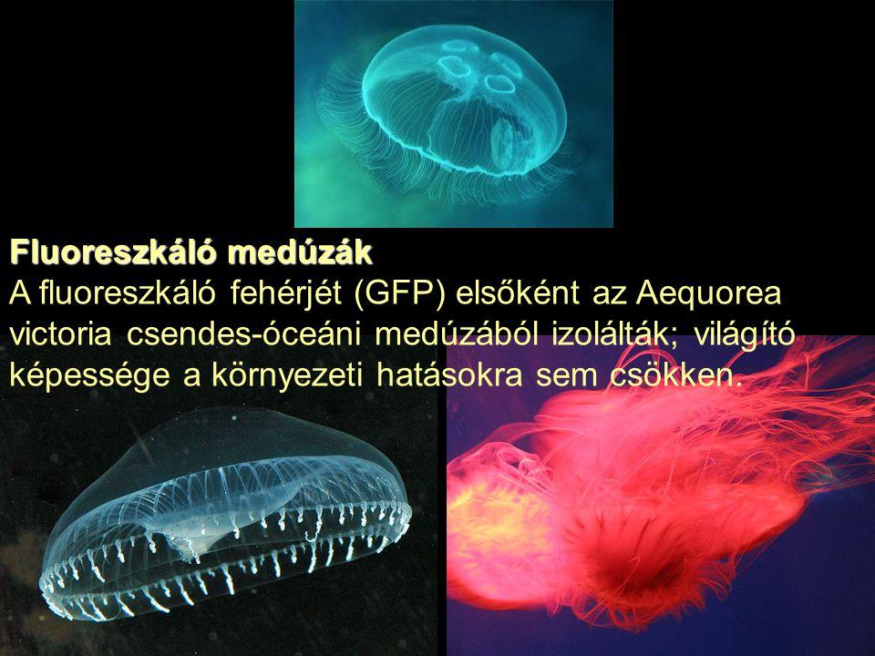 Fluoreszkáló medúzák
