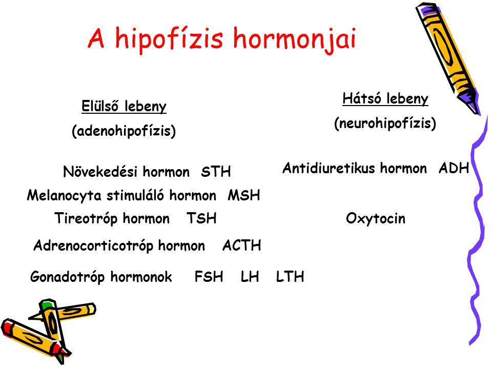 Melanocyta stimuláló hormon MSH Adrenocorticotróp hormon ACTH