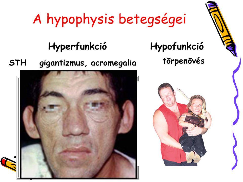 A hypophysis betegségei
