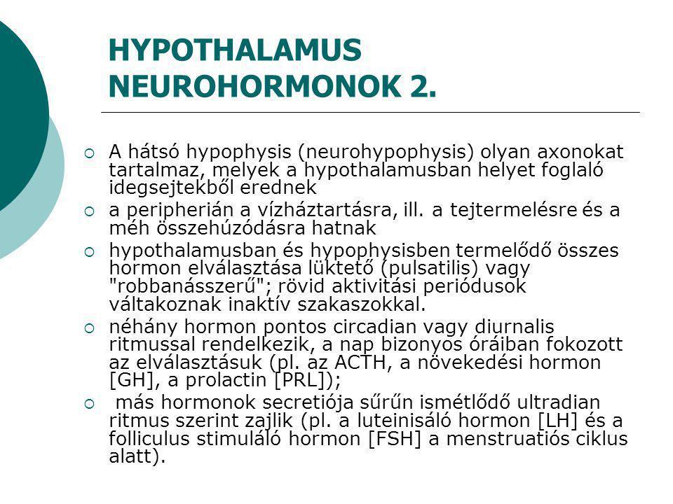HYPOTHALAMUS NEUROHORMONOK 2.