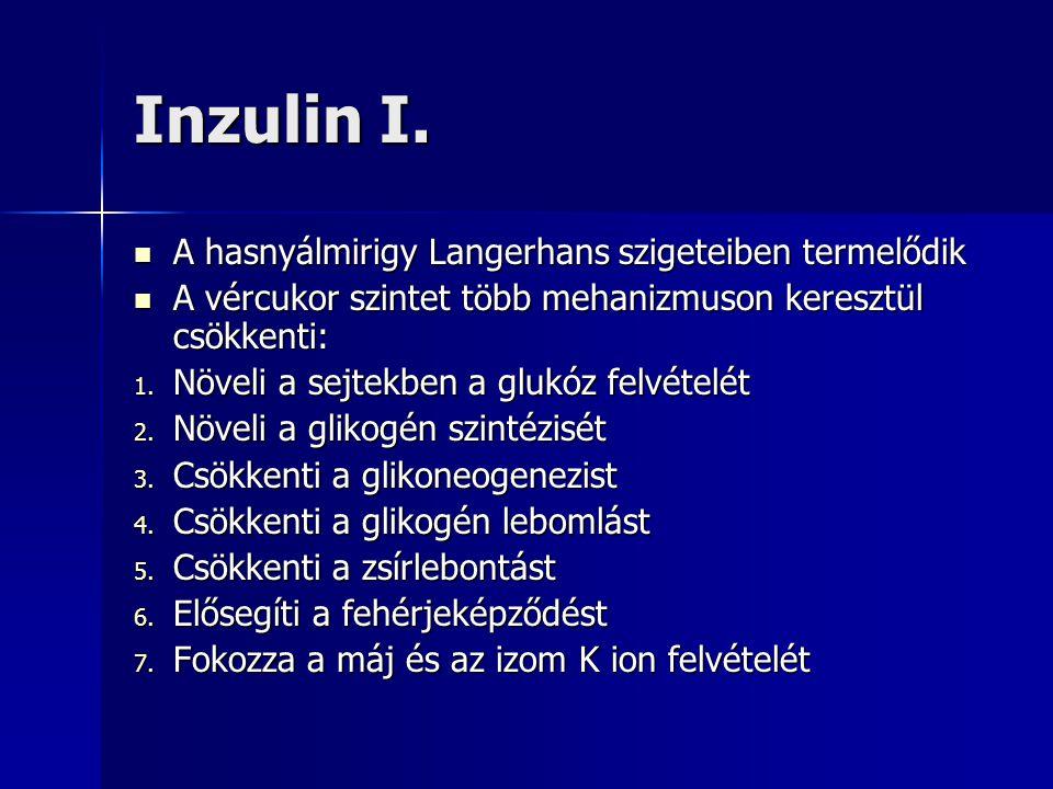 Inzulin I. A hasnyálmirigy Langerhans szigeteiben termelődik