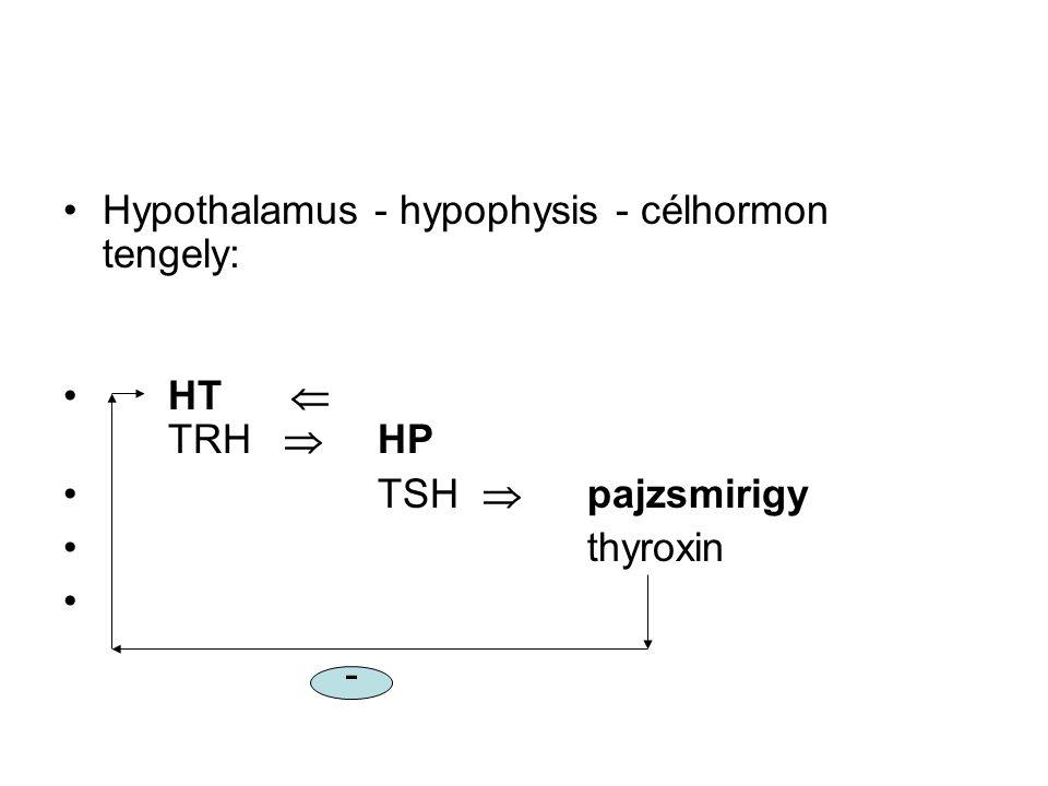 Hypothalamus - hypophysis - célhormon tengely: