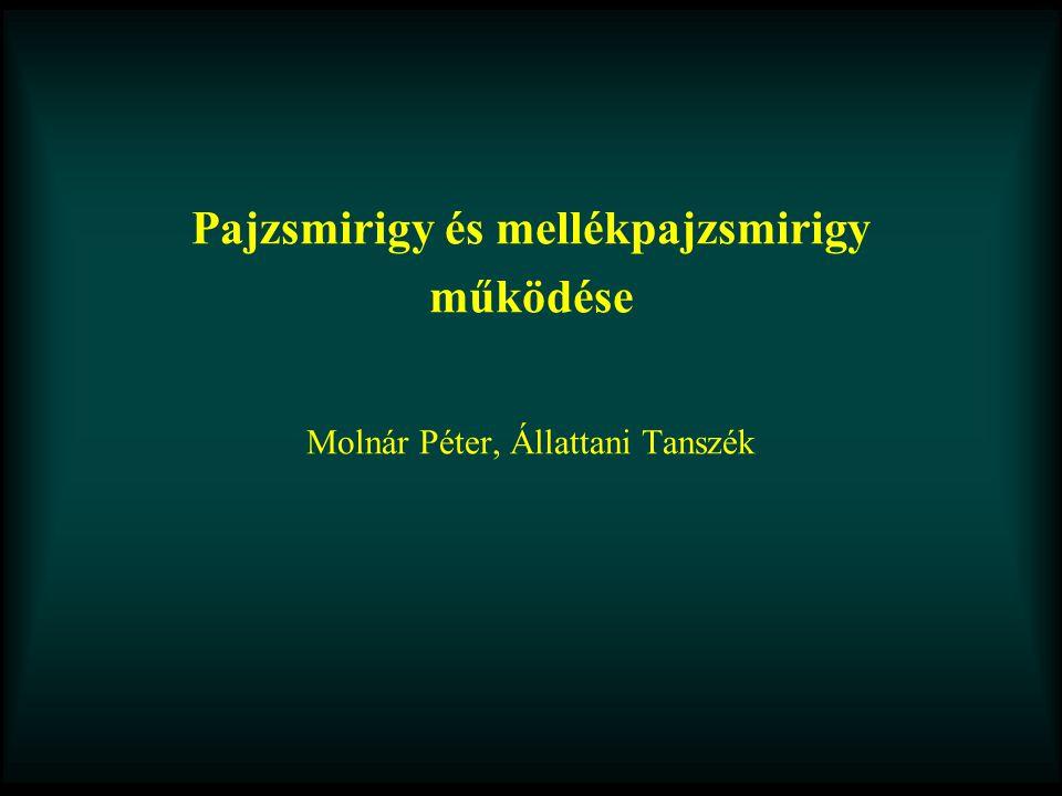 Pajzsmirigy és mellékpajzsmirigy működése Molnár Péter, Állattani Tanszék