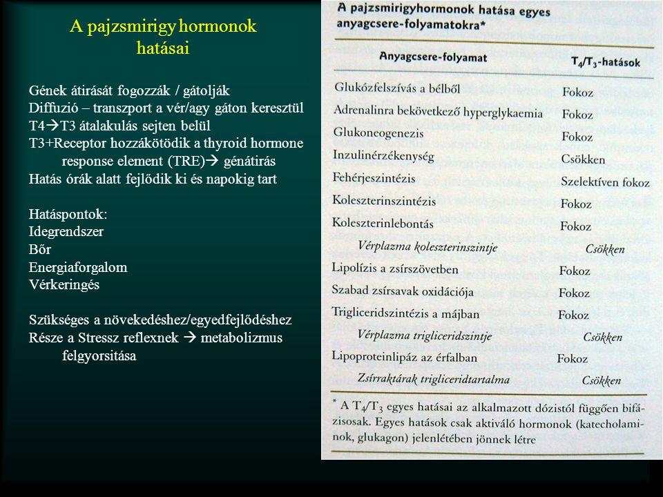 A pajzsmirigy hormonok hatásai