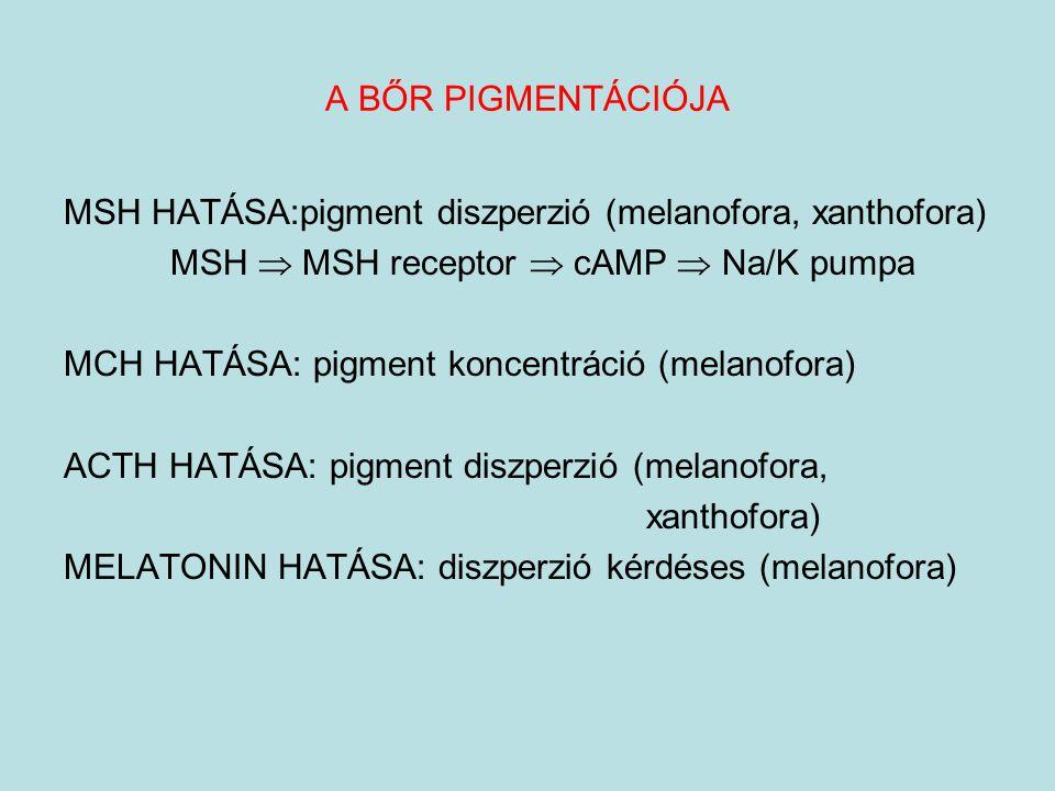 A BŐR PIGMENTÁCIÓJA MSH HATÁSA:pigment diszperzió (melanofora, xanthofora) MSH  MSH receptor  cAMP  Na/K pumpa.