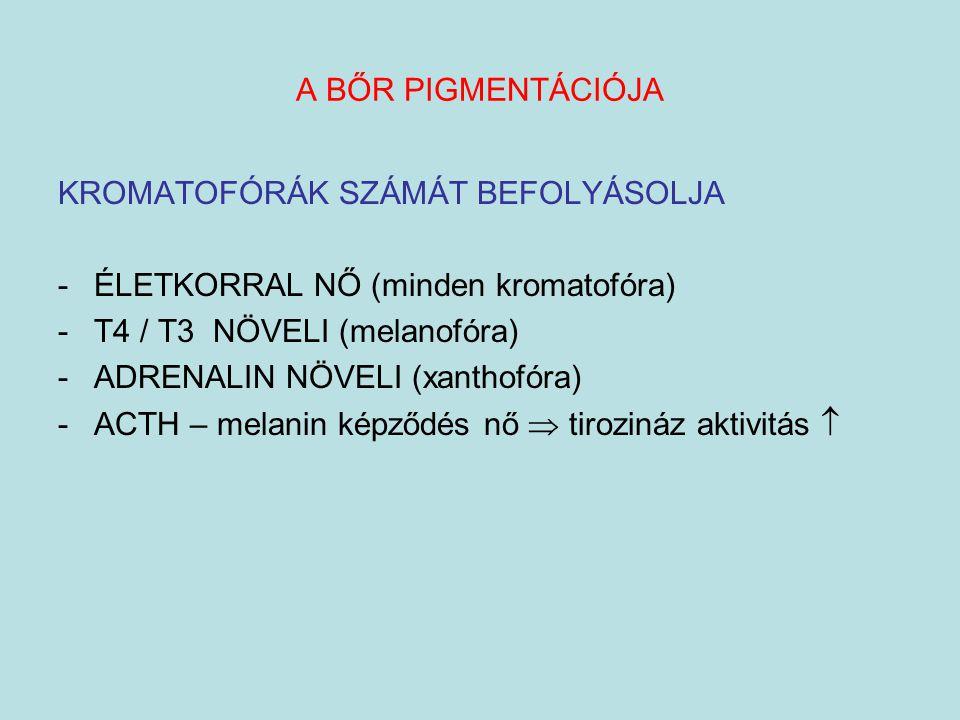 A BŐR PIGMENTÁCIÓJA KROMATOFÓRÁK SZÁMÁT BEFOLYÁSOLJA. ÉLETKORRAL NŐ (minden kromatofóra) T4 / T3 NÖVELI (melanofóra)