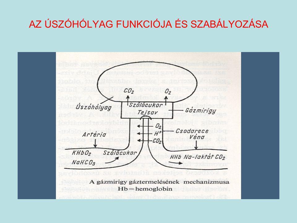 AZ ÚSZÓHÓLYAG FUNKCIÓJA ÉS SZABÁLYOZÁSA
