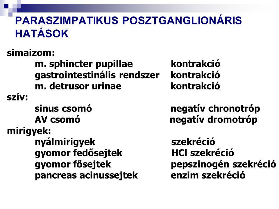PARASZIMPATIKUS POSZTGANGLIONÁRIS HATÁSOK