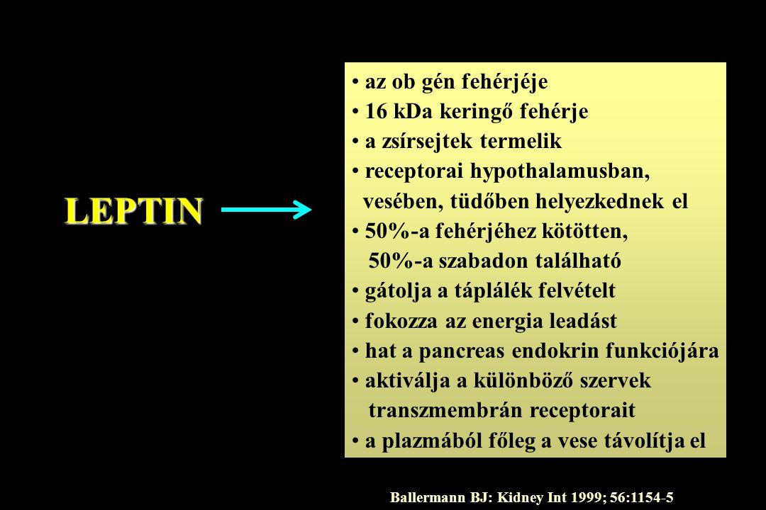 LEPTIN az ob gén fehérjéje 16 kDa keringő fehérje